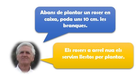 Consell Pere