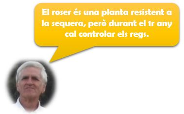 Consells Pere